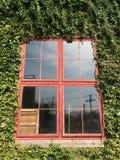 Czerwony okno z rośliną Obraz Royalty Free