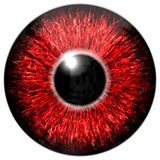 Czerwony oko Obraz Royalty Free