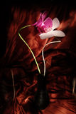 czerwony orchidea biel Fotografia Royalty Free