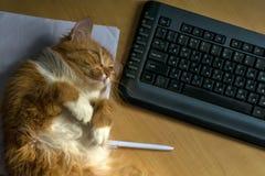 Czerwony owłosiony pussycat lying on the beach blisko klawiatury na stole fotografia stock