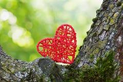 Czerwony łozinowy serce między drzewnymi bagażnikami przeciw zielonemu bokeh tłu Ochrona środowiska i miłość natury pojęcie Fotografia Royalty Free