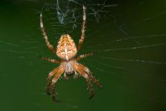 czerwony pająk Zdjęcia Stock
