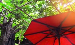 Czerwony parasol pod drzewa i słońca światłem Zdjęcie Stock