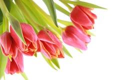 czerwony piękności Obrazy Royalty Free