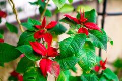 Czerwony piękny kwiat fotografia royalty free