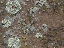 Czerwony piaskowiec z liszajami - tło Obrazy Stock