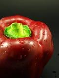 czerwony pieprzowa zdjęcie royalty free