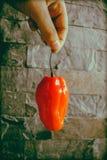 czerwony pieprzowa Fotografia Stock