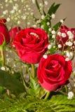 czerwony pierścień rose Obraz Stock