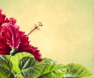 Czerwony poślubnika kwiat z liśćmi na żółtym tle obraz royalty free