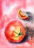 Czerwony pomidor Fotografia Stock