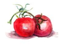 Czerwony pomidor Obraz Royalty Free
