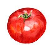 Czerwony pomidor ilustracji