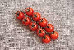 Czerwony pomidor na be?owym tle Czereśniowy pomidor na zielonej gałąź jest na burlap najlepszy widok fotografia royalty free