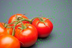 Czerwony pomidor z kroplami woda która denotes świeżość i zdrowie, obraz stock