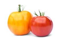 czerwony pomidorowy kolor żółty Zdjęcia Royalty Free