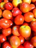 Czerwony pomidoru tło Zdjęcia Stock