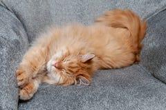 Czerwony puszysty kota sen na kanapie zdjęcia royalty free