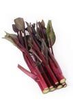 czerwony rapeseed badyl Zdjęcia Royalty Free