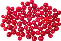 Czerwony rodzynek, cranberries, marznący Makro-, marznący organicznie Czerwony rodzynek, Zdjęcia Royalty Free