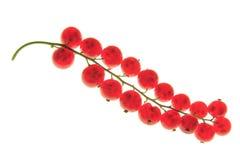 Czerwony rodzynek (Ribes rubrum) Zdjęcie Royalty Free