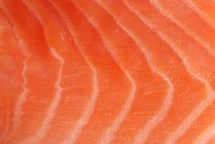 czerwony ryb Zdjęcie Stock