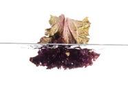 Czerwony sałata liść Zdjęcie Stock