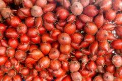 czerwony salacca wallichian obrazy stock