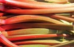 Czerwony scallion Zdjęcie Stock