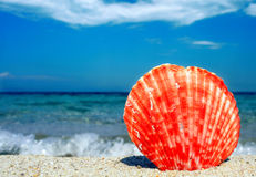 Czerwony seashell Zdjęcia Stock
