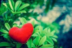 Czerwony serce Obraz Royalty Free