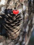 Czerwony serce na sosna rożku Obraz Stock