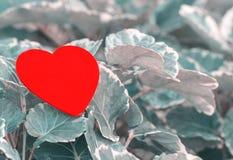 Czerwony serce na zielonym liściu z natury tłem Fotografia Stock