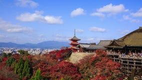 Czerwony spadek opuszcza jesień przy Kiyomizu-dera świątynią w Kyoto, Japonia zbiory wideo
