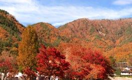 Czerwony spadku ulistnienie w jesieni blisko Fujikawaguchiko, Yamanashi Drzewo fotografia stock