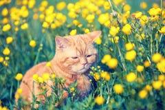 Czerwony tabby kot na kwiatu gazonie fotografia stock