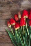 Czerwony tulipan Tulipany kwiat światła playnig tło Kwitnie fotografii pojęcie Wakacje fotografii pojęcie Copyspace Zdjęcia Royalty Free