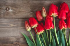 Czerwony tulipan Tulipany kwiat światła playnig tło Kwitnie fotografii pojęcie Wakacje fotografii pojęcie Copyspace Obrazy Royalty Free