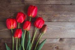 Czerwony tulipan Tulipany kwiat światła playnig tło Kwitnie fotografii pojęcie Wakacje fotografii pojęcie Copyspace Zdjęcie Stock