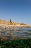 czerwony wielbłąda morze Zdjęcia Stock