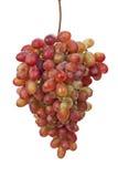 Czerwony winogrono Fotografia Stock