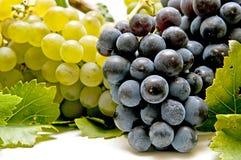 czerwony winogrono biel Zdjęcie Royalty Free