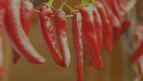 Czerwony wysuszony chili pieprzu zrozumienie na drucie suszyć Zamyka w górę strzału zbiory