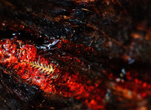 Czerwony żywica paproci drzewo obraz royalty free