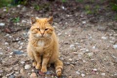 Czerwony z włosami kot z jeden okiem obraz royalty free