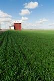 Czerwony Zbożowej windy niebieskich nieb rolnictwa Zielonych upraw pole Fotografia Stock
