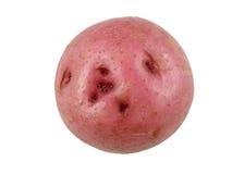 czerwony ziemniaka fotografia royalty free