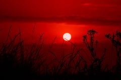 Czerwony zmierzch nad łąkową sylwetki trawą Zdjęcia Royalty Free