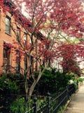 Czerwony zmierzch w Nowy Jork Zdjęcie Royalty Free