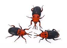 Czerwony zwijacza insekt na białym tle Obrazy Stock